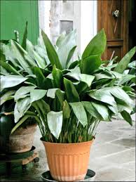five easy houseplants