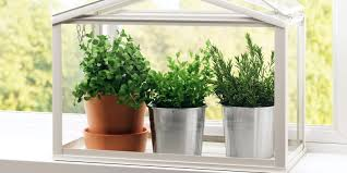 outstanding indoor gardening ideas greenhouse indoor garden ideas