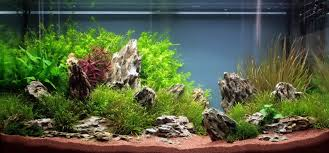 Dramatic Aquascapes Home Accessories Aquascape Designs With Best Styleedition Chicago