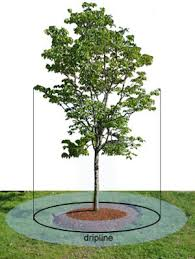 tree care when to water trees gardener s supply