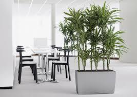 office plant office plants rented in birmingham u0026 midlands office landscapes