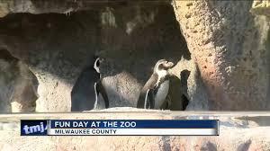 families enjoy zoo tradition on thanksgiving tmj4 milwaukee wi