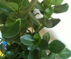 common indoor house plants competent capture houseplant pictures