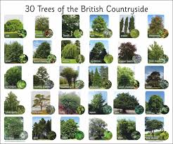 30 trees of the countryside nature science outside