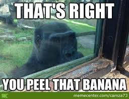 Pervert Meme - pervert gorilla by recyclebin meme center