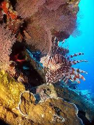 christmas island diving dive trips christmas island surf