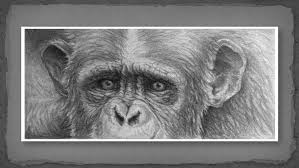 drawing from photographs udemy