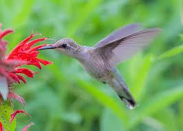 native plants that attract butterflies attracting birds bees and butterflies u2013 bowman u0027s hill wildflower