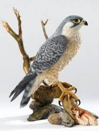 bird figures dartpalyer home