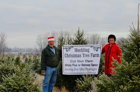 christmas tree farm 040 jpg