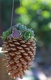 decoration best succulent garden ideas for by the beautiful sea