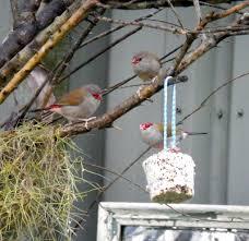 native birds in the winter garden qp and eye