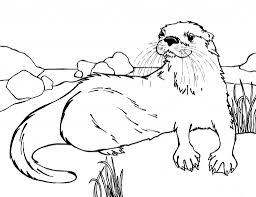 otter coloring pages with regard to invigorate in coloring page