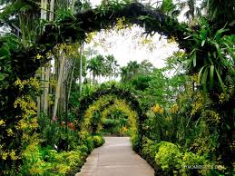 Botanical Gardens In Singapore by Photo Journal Singapore Botanic Gardens My Mommy Flies