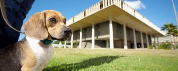Burying Your Dog In The Backyard Legality Current Laws Hawaiian Humane Society