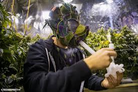 happy 420 nike sb u201cskunk u201d dunk mask u2013 the blog freehandprofit com