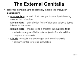 hairless pubis chapter 28 lecture powerpoint ppt download
