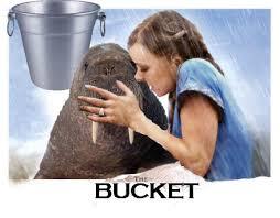 Meme Bucket - the complete walrus bucket saga