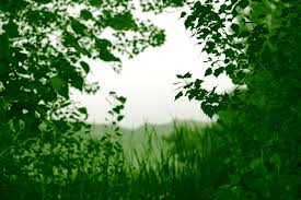 file free green nature border frame creative commons 4768791113