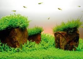 Aquascaping Plants How To Aquascape Small Tanks U2014 Practical Fishkeeping Magazine