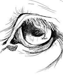 horse eye sketch by ragdollstitches on deviantart