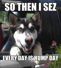 Hump Day Meme Funny - 12 funny hump day memes that will make your whole week
