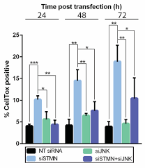 exploring stathmin control of cell survival through negative