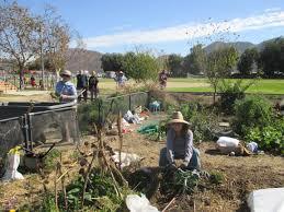 ogcvc organic garden club of ventura county