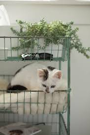 indoor plants how do you keep your cats away apartment therapy