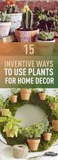 15 inventive ways to use plants for home decor imagination