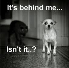 Funny Chihuahua Memes - 12 best chihuahua memes of all time