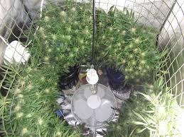michigan medical marijuana report grow tip the
