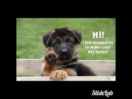 Funny German Shepherd Memes - funny german shepard memes youtube