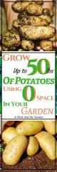 1153 best vegetable garden images on pinterest veggie gardens