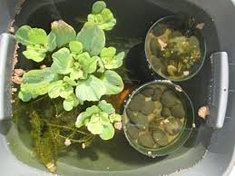 my new container pond my backyard nature