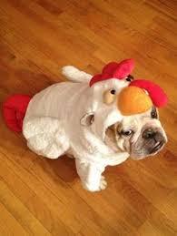 English Bulldog Halloween Costumes Strength Hulk Bulldog Costume Halloween