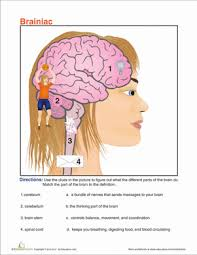 understanding the human body 5th grade worksheets education com