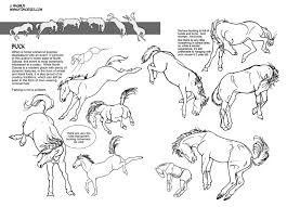 Goat Eye Anatomy 668 Best Drawing Sculpting Painting Horses Images On Pinterest