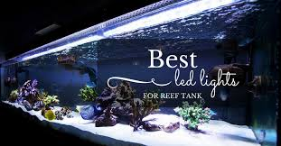 led reef aquarium lighting top 5 best led lights for reef tank in 2018 market review by