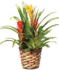 plant of the month club plant of the month club potted plants delivery calyx flowers