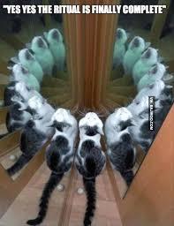 Mirror Meme - funny mirror and cat bajiroo com