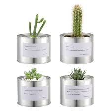 Small Indoor Trees by Compare Prices On Indoor Succulents Planters Online Shopping Buy