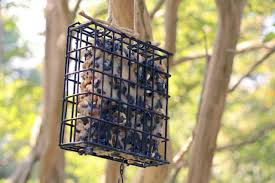 feeding birds and squirrels during the winter months diy network