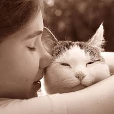 pet bereavement pet bereavement counsellor diploma course centre of excellence