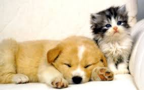 dog and cat backgrounds collection 53