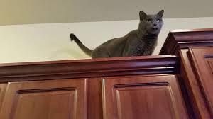 cat home decor kitchen cabinet cat cat home decor cat tile cat carpet cat