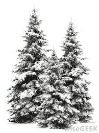 trees with snow on them decore