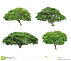 set of tropical tree stock photo image of branch 31919222