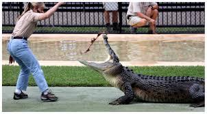 bartender resume template australia zoo crocodile feeding videos on tour audience of 1