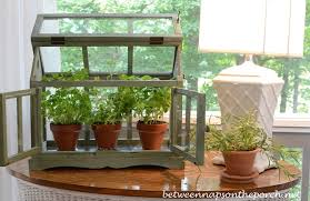 tabletop greenhouse or terrarium for growing herbs